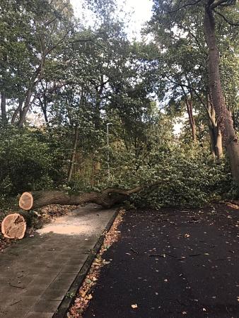 Dieser Baum dohte in Steyerberg in der Straße