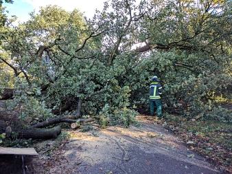 Der entwurzelt Baum blockierte auch eine Straße in Deblinghasuen-Staken.