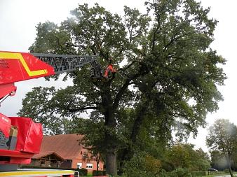 Mit Hilfe der Drehleiter Liebenau wurde in Düdinghausen eine abgebrochene Baumkrobe entfernt.